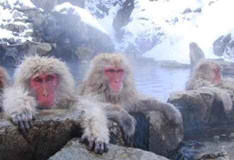 These monkeys know how to party